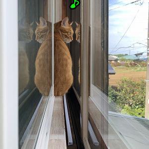 双頭の猫 【一枚】