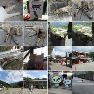 台湾一人旅⑦ 台湾の猫村で最後に撮った1枚。