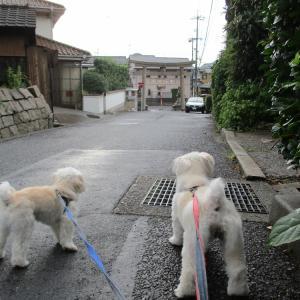 台風の日の散歩
