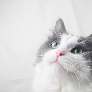 猫がコーヒーを誤って飲んでしまった!どんな危険性があるの?
