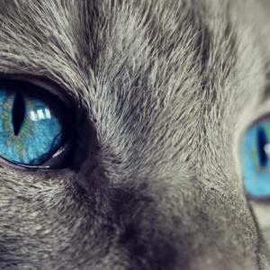 猫の結膜炎は自然に治る?なにが原因なの?