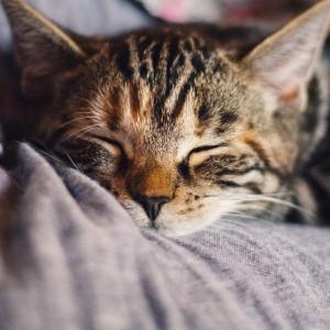 猫がお留守番しやすい最適なケージの選び方とセッティング方法