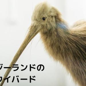 ニュージーランドの国鳥キウイバードはどんな鳥?