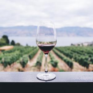 ワインの勉強  -初心者向け・中南米ワインで学ぶ-