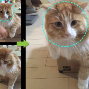 画像合成ソフトの進化 驚異!?