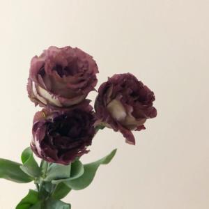フラワーフライデーで買ったお花