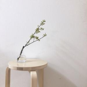 枝ものとフローラベース