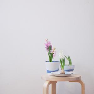 ヒヤシンスの開花と今日の手放し