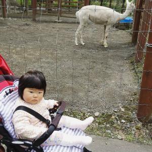 初・動物園!