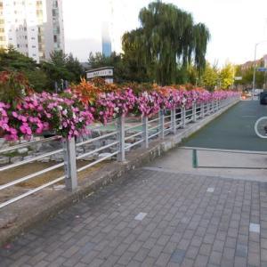 ソウルの道の花