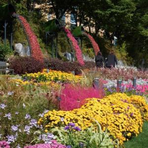 韓国・ソウルの河川敷遊歩道の花壇