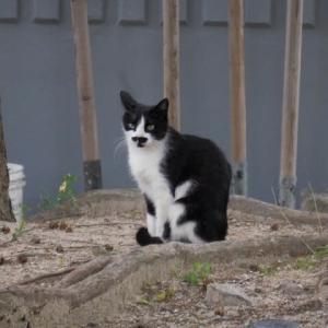 ソウルの街で見かけた猫