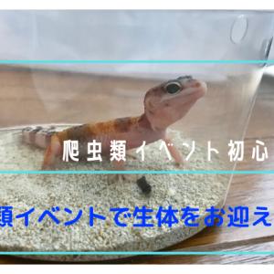 【イベント初心者ガイド】爬虫類イベントで生体をお迎えしよう