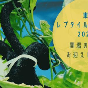 【爬虫類イベントレポ】東京レプタイルズワールド2020冬