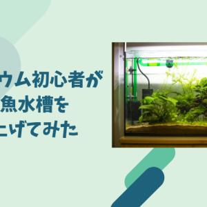 アクアリウム初心者が熱帯魚水槽を立ち上げてみた