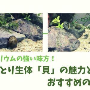 アクアリウムの強い味方!コケとり生体「貝」の魅力とおすすめの種類