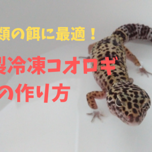 【爬虫類の餌】自家製冷凍コオロギの作り方