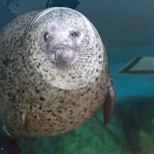 7年ぶりにしながわ水族館へ