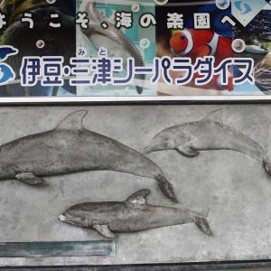 日本の海獣飼育のパイオニア「伊豆・三津シーパラダイス」へ【海獣記】