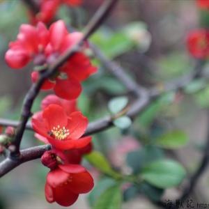 平成30年度と31年度の狭間の春の花たち