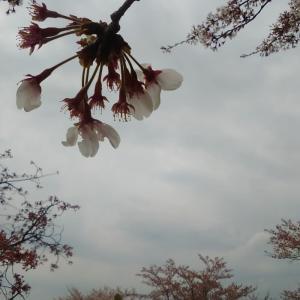 花曇り by 空倶楽部