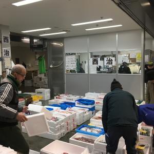 【豊パト】愛媛県八幡浜の真鯛@西治分店