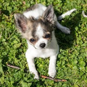 ひとり暮らしの私が始めて犬を飼った理由~ペットがいる生活は幸せです