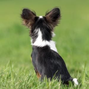 私が経験した犬との別れとペットロス~克服できたきっかけは愛犬のうしろ姿
