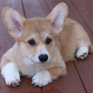 威嚇して攻撃行動をする愛犬~口輪をするしか解決できなかった後悔の話