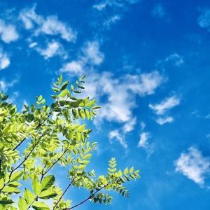 家について考える【シンボルツリー】庭木の剪定は結構キツイ。植え過ぎに注意!!!