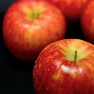 台風17号は1991年のりんご台風と似ている?りんご台風の被害は?