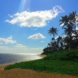 ハワイ在住の元人気女優Sは相楽晴子、オフグリッド生活とは?娘がコロナ?