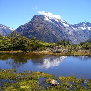 野口絵子は野口健の娘、ニュージーランドのロイズピーク、飛べない鳥タカヘとは?