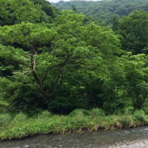 岐阜の渓流FF20200618