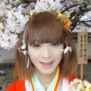 京都福知山城を打掛の着物を着てお花見!