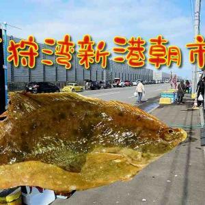 石狩湾新港朝市 新鮮な魚介を浜値でゲット!アクセス方法やおすすめの食べ方