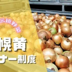 札幌黄オーナー制度 玉ねぎの発祥は札幌!札幌伝統野菜を育てて食べてよく知ろう