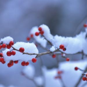 天気に関する英語【雪・風・嵐】「みぞれ」は英語で何て言う?