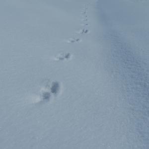 スノーシュー付けて歩くよ雪の上