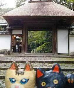 ミャウゼ(京都 安楽寺)楽しかった~!