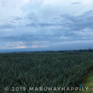 【フィリピン旅行記】POLOMOLOK/どこまでも続くパイナップル畑を訪ねて!ver.2020