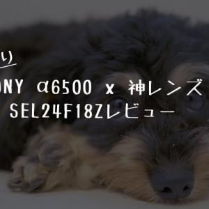 神レンズSEL24F18Z x α6500レビュー|SONYのEマウントAPS-C【作例あり】