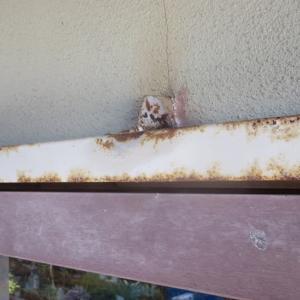 斑入り茂木枇杷の 挿し木苗と実生苗の今、 ミツバチが工場の入り口の壁の中に巣作り。