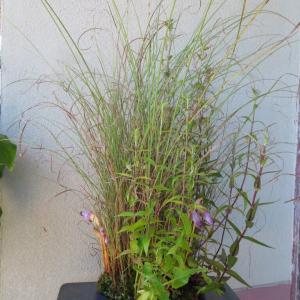 植物の世界ではもう秋の気配?。  他