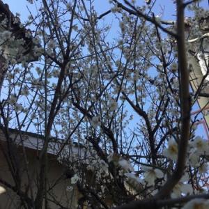 庭に春が来て