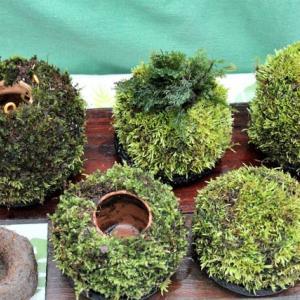 苔玉の作成