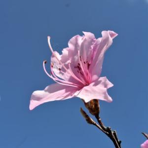 花と空と・ギボウシ