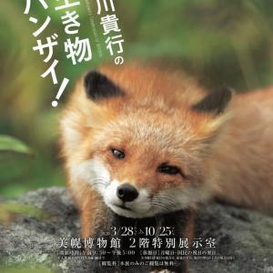 動物写真家 前田貴行氏の作品を・・・