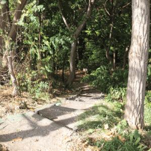 精進川河畔公園~精進川の滝~