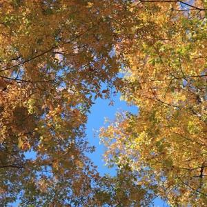 豊平公園の紅葉